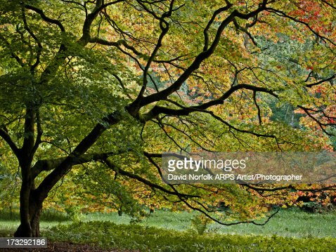 Autumn tree : Stock Photo