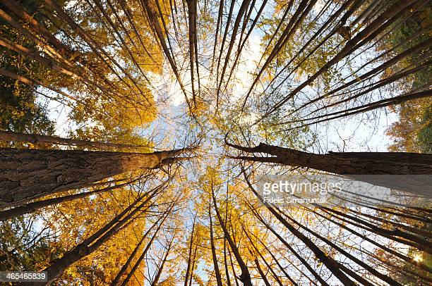 Autumn tree view at daytime taken from below