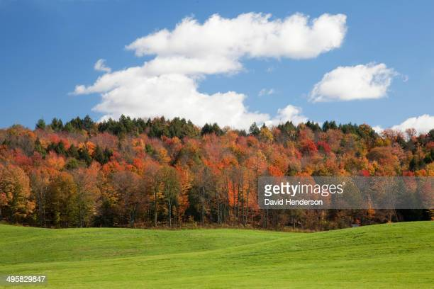 Autumn trees, Adirondacks, New York, United States