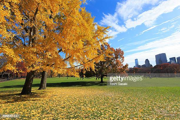 Autumn trees and fallen leaves at Sheep Meadow.