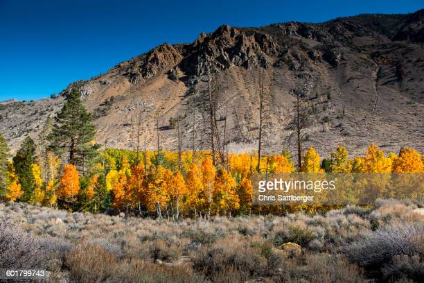Autumn trees and remote mountains
