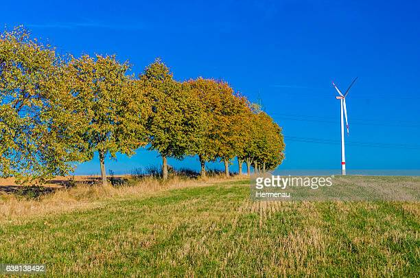 autumn trees and wind turbine