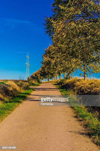 autumn trees by the wayside