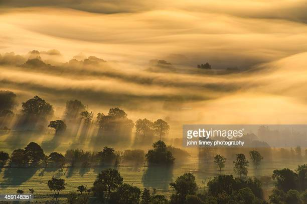Autumn trees in golden mist, English Countryside