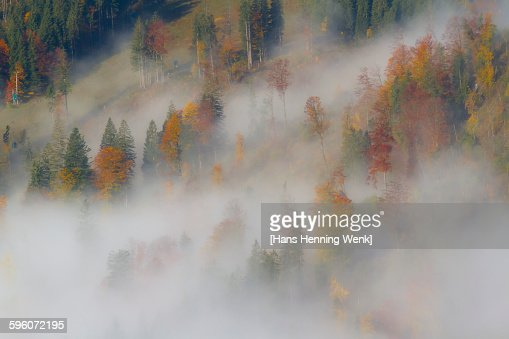 Autumn trees in morning fog