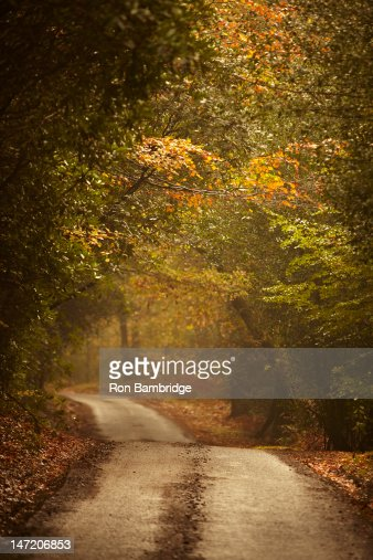 Autumn trees lining rural lane in woods