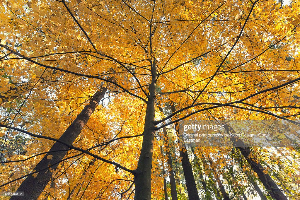 Autumn trees, Madison, Wisconsin : Stock Photo