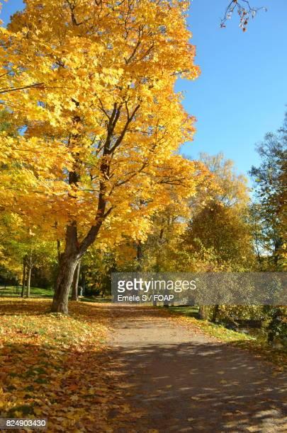 Autumn trees near road