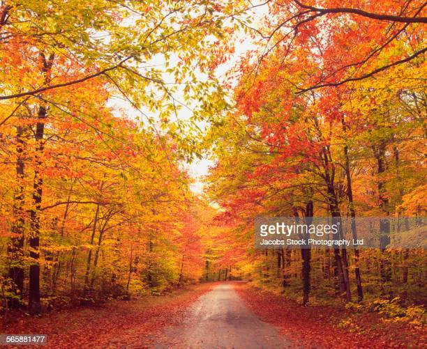 Autumn trees over dirt path in forest