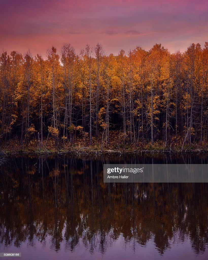 Autumn trees reflected in a lake at sunset : Stock Photo