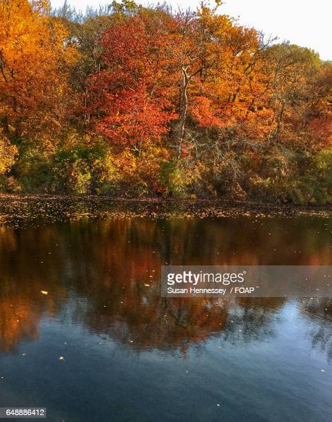 Autumn trees reflecting on river