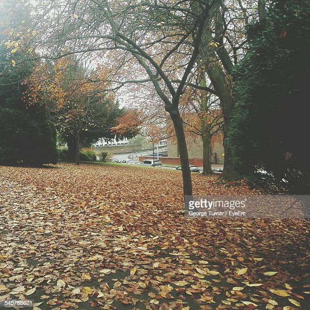 Autumn Trees With Fallen Leaves In Field