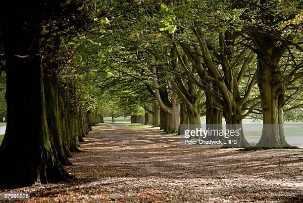Autumn Treescape Tatton