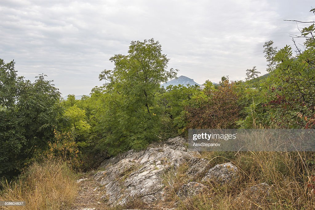 Outono músicas nas Terras Altas : Foto de stock
