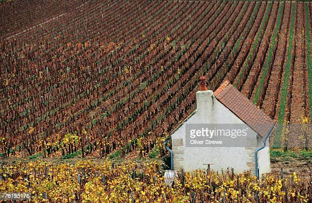 Autumn vineyards and farmhouse, Cote de Beaune, Beaune, Burgundy, France, Europe