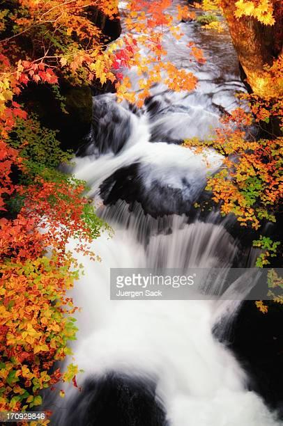 秋の太陽の光の滝