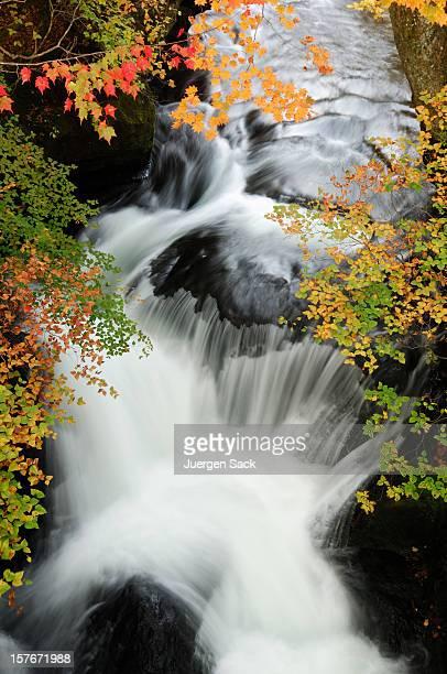 日光の秋の滝