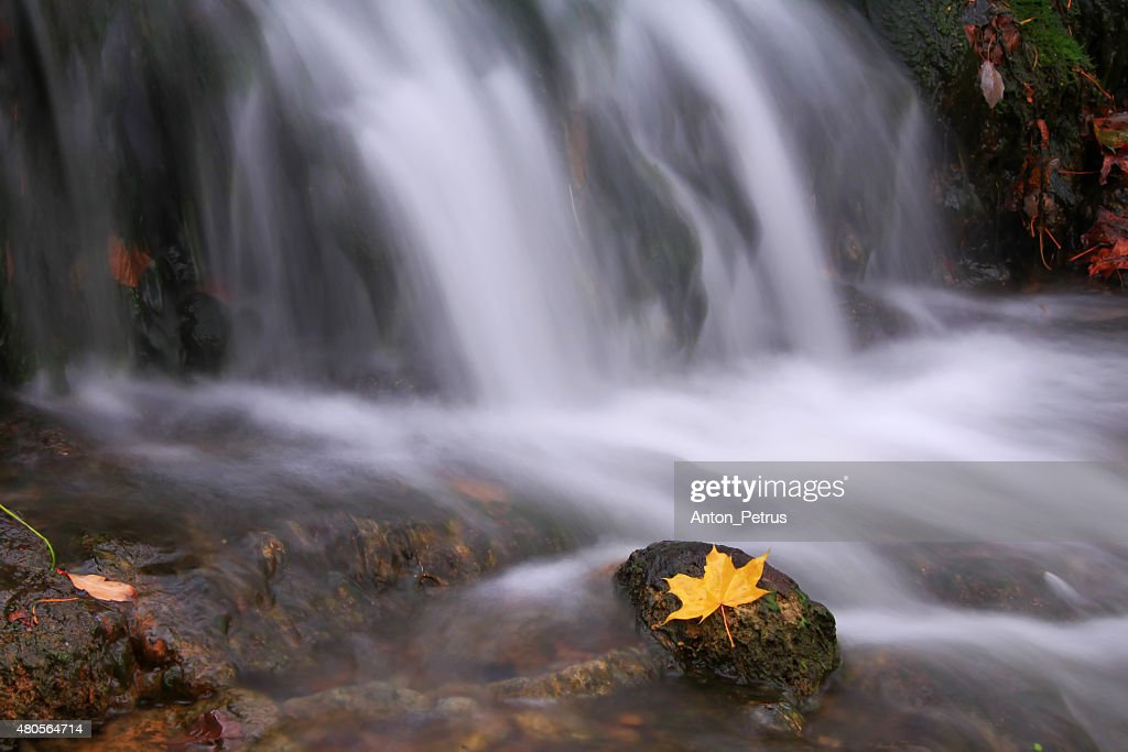 Autumn waterfall with maple leaf : Stock Photo