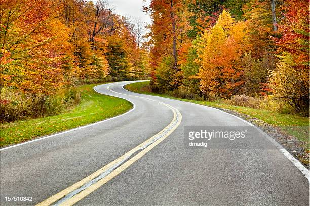 Autumn Winding Road Flanked by Brilliant Foliage