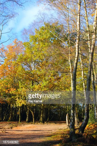 Autumn Woodland Pathway : Stock Photo