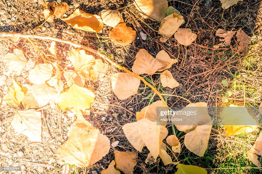 autumn yellow leaves in the middle of the moss : Stockfoto
