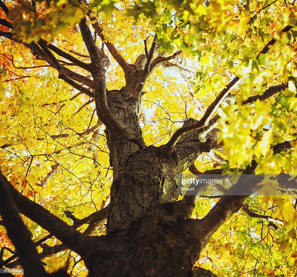 Outono amarelos : Foto de stock