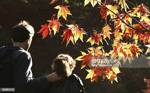 Autumnal colours are seen on the leaves of trees at the National Arboretum at Westonbirt on October 22 2005 in Gloucestershire in England