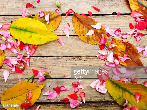 Autumnal composition of colorful flowers and yellow leaves : Foto de stock