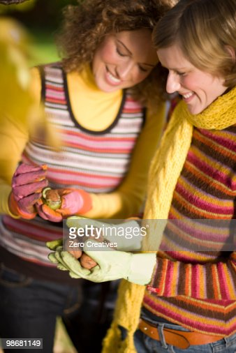 autumnal gardening : ストックフォト