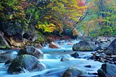 Autumnal Leaves and a River in the Matsukawa Valley. Takayama, Gifu Prefecture, Japan