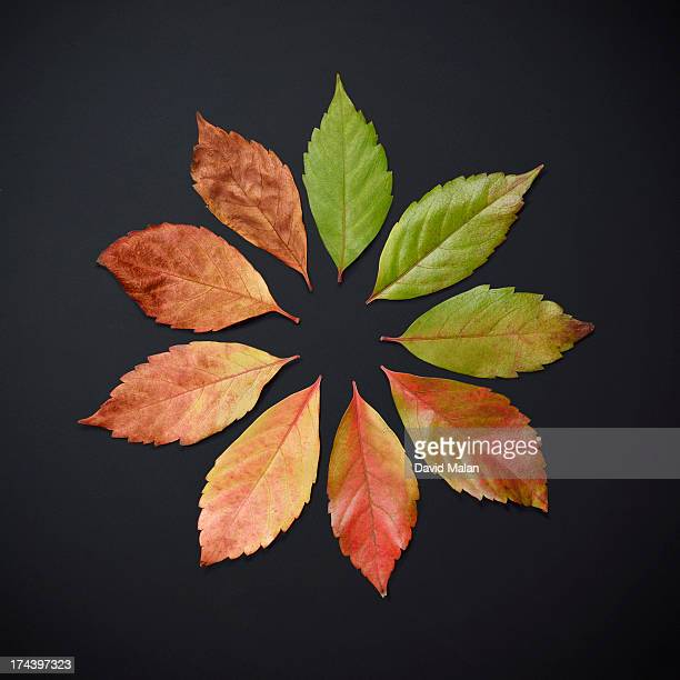 Autumnal leaves arranged from green to brown