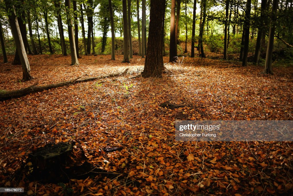 Autumnal leaves carpet a woodland floor in the Cheshire countryside on October 21, 2013 in Knutsford, United Kingdom. The mild weather in the United Kingdom has delayed Autumn by up to two weeks according to statistics by The Woodland Trust. Members of the public have submitted their observations to the trust's Nature's Calendar which shows that the traditional Autumn tints are finally appearing on ash, elder, oak and horse chestnut.