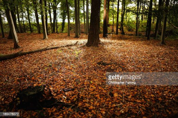 Autumnal leaves carpet a woodland floor in the Cheshire countryside on October 21 2013 in Knutsford United Kingdom The mild weather in the United...