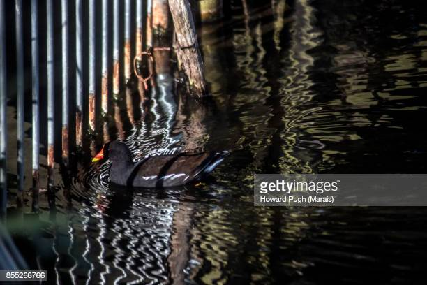 Autumnal London:  Reflections of A Duck Pond