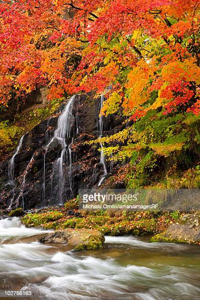 Autumnal maple trees and the Nakano river. Aomori Prefecture, Japan