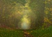 Autumnal Misty Woods
