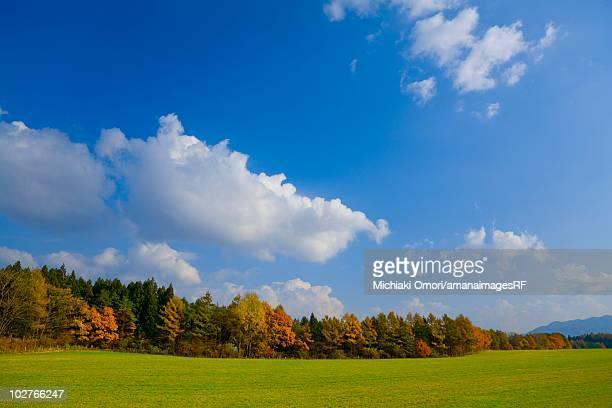 Autumnal trees, a field and cumulus clouds. Shizukuishi, Iwate Prefecture, Japan