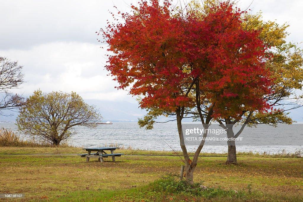 Autumnal Trees by Lake Biwa