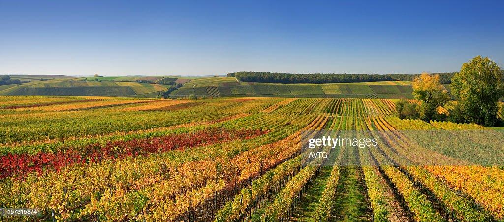 Autumnal Wineyards