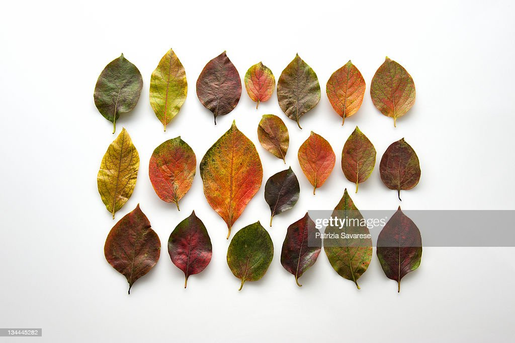 autumn-colored leaves