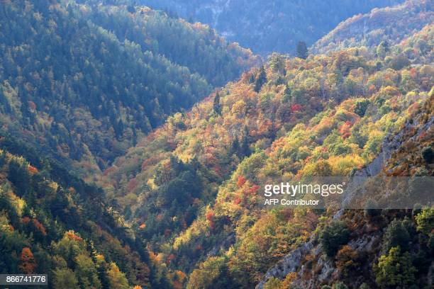 Autumncolored trees are pictured on October 26 in SaintMartinVesubie / AFP PHOTO / VALERY HACHE