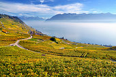 Autumn-coloured vineyards with mist, at Lake Geneva, Lavaux, UNESCO World Heritage Site, Epesses, Canton of Vaud, Switzerland