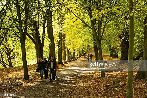 Autumnáleaves in Hampstead Heath.