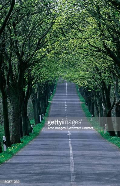 Avenue in spring, Lohme, Isle of Rugen, Mecklenburg-Western Pommerania, Germany