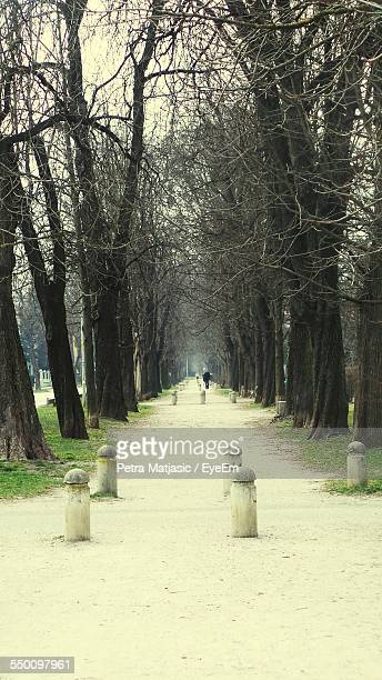 Avenue Of Bare Trees At Park