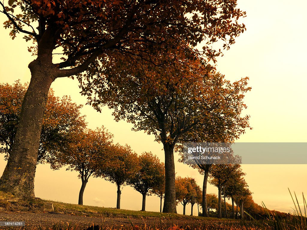 Avenue Of Colorful Autumn Trees : Stock Photo