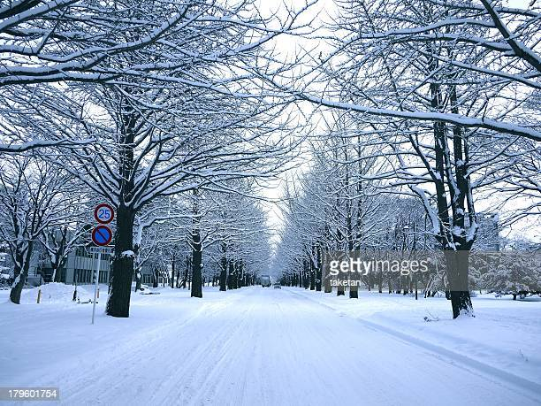Avenue of ginkgo trees in Winter