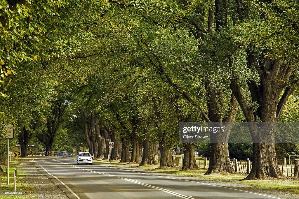 Avenue of Honour : Stock Photo