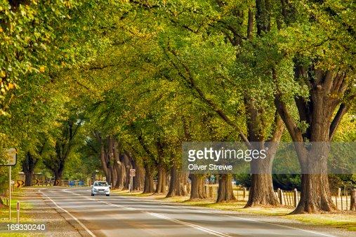 Avenue of Honour : Stock Photo