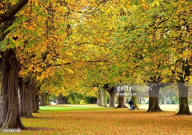 Avenue of Horse Chestnut trees